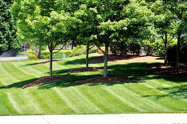 Lawn Maintenance Lake Norman Taylor Lawn Care
